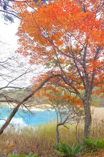 五色沼湖沼群の写真素材 [FYI04034749]