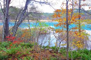 五色沼湖沼群の写真素材 [FYI04034750]