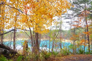 五色沼湖沼群の写真素材 [FYI04034751]