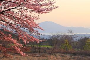 田沢湖高原の桜の写真素材 [FYI04034794]