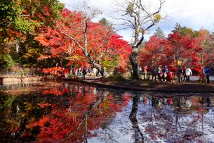 雲場池の紅葉の写真素材 [FYI04034847]