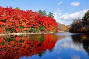 雲場池の紅葉の写真素材 [FYI04034849]