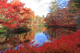 雲場池の紅葉の写真素材 [FYI04034850]