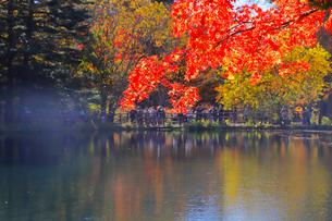 雲場池の紅葉の写真素材 [FYI04034853]
