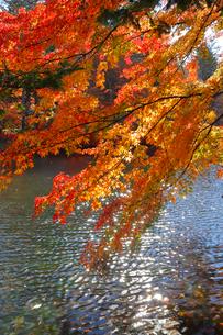 雲場池の紅葉の写真素材 [FYI04034855]