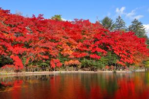 雲場池の紅葉の写真素材 [FYI04034856]