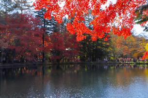 雲場池の紅葉の写真素材 [FYI04034858]