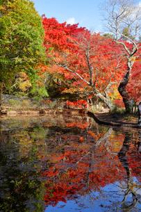 雲場池の紅葉の写真素材 [FYI04034860]