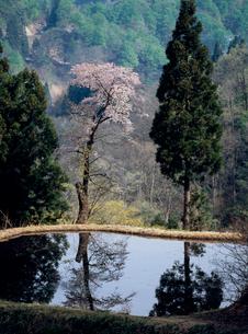 水田に映る春景色の写真素材 [FYI04034911]