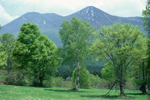 新緑の笹ヶ峰高原の写真素材 [FYI04035185]