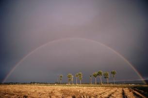 虹とハサ木の写真素材 [FYI04035229]