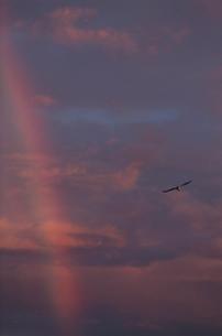 夕焼け雲と虹と鳥の写真素材 [FYI04035258]