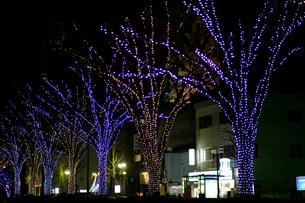 富山城址公園南側広場のホワイトイルミネーションの写真素材 [FYI04035439]