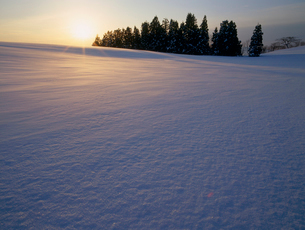 雪原を照らす朝日と木立の写真素材 [FYI04035696]