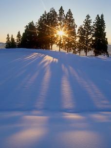 雪原を照らす朝日と木立の写真素材 [FYI04035702]