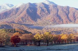 笹ヶ峰牧場の初冠雪と紅葉の写真素材 [FYI04035786]