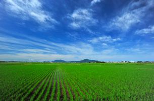 新潟の田園風景の写真素材 [FYI04035887]