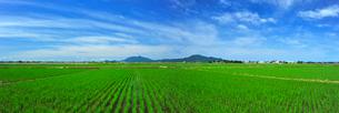 新潟の田園風景の写真素材 [FYI04035900]