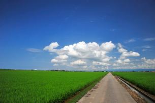 新潟の田園風景の写真素材 [FYI04035903]