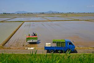 新潟の農作業風景の写真素材 [FYI04035921]