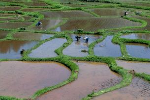 新潟の田園風景と農作業の写真素材 [FYI04035931]
