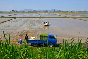 新潟の農作業風景の写真素材 [FYI04035938]