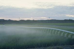新潟の農作業風景の写真素材 [FYI04035942]