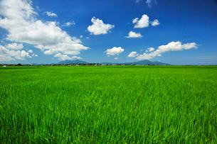 新潟の田園風景の写真素材 [FYI04035970]