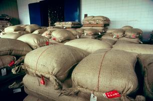 出荷前の米袋の写真素材 [FYI04035973]