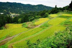 松之山の棚田の写真素材 [FYI04036021]