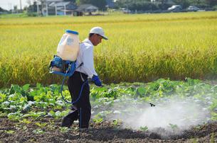 農薬散布する男性の写真素材 [FYI04036022]