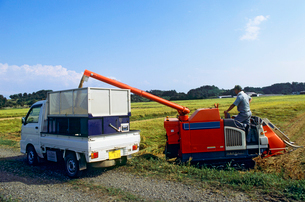 稲の脱穀作業の写真素材 [FYI04036065]