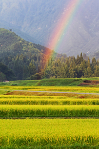 田園風景に掛かる虹の写真素材 [FYI04036096]