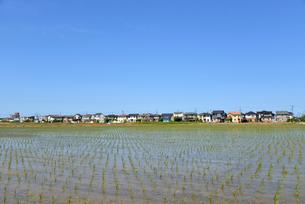 新潟の田植え風景の写真素材 [FYI04036229]