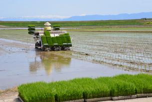 新潟の農作業風景の写真素材 [FYI04036311]