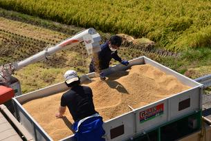 新潟の農作業風景の写真素材 [FYI04036336]