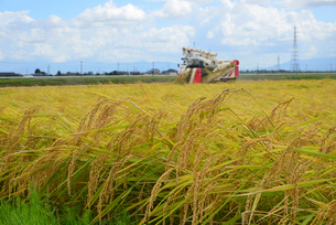 新潟の農作業風景の写真素材 [FYI04036341]
