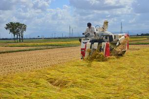 新潟の農作業風景の写真素材 [FYI04036343]
