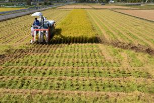 新潟の農作業風景の写真素材 [FYI04036359]