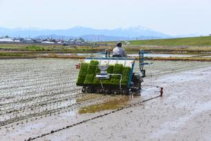 新潟の農作業風景の写真素材 [FYI04036384]