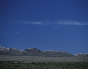 牧草地と羊の群 ソン・キョル湖東岸の写真素材 [FYI04036447]