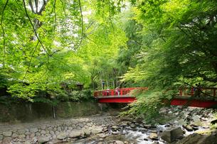 新緑の桂橋の写真素材 [FYI04036528]
