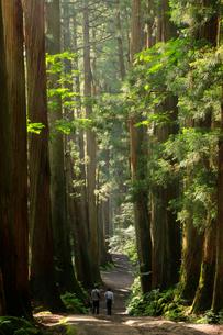 戸隠神社の奥社参道杉並木と参拝者の写真素材 [FYI04036542]