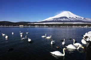 富士山の写真素材 [FYI04036596]
