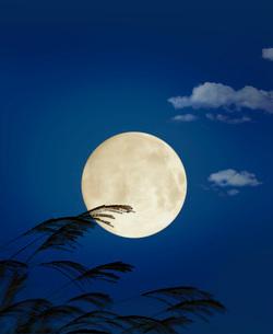 満月の写真素材 [FYI04036724]