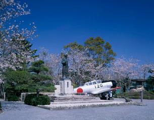 桜の写真素材 [FYI04036865]