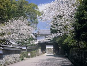 桜の写真素材 [FYI04036869]