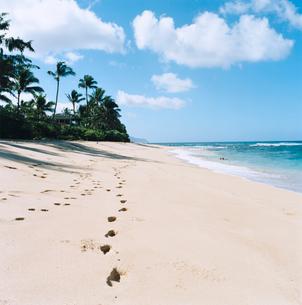 ノース・ショアの海と砂浜の足跡の写真素材 [FYI04037109]