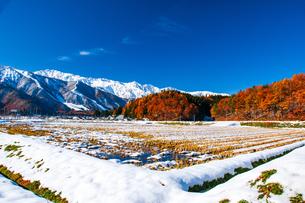 白馬村雪景色の田園に紅葉の山林と冠雪の白馬連峰の山並みの写真素材 [FYI04037914]