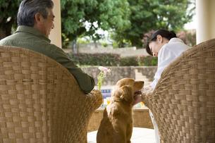 ソファに座る50代夫婦と犬の後姿の写真素材 [FYI04037942]
